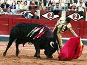 bull fighting mijas